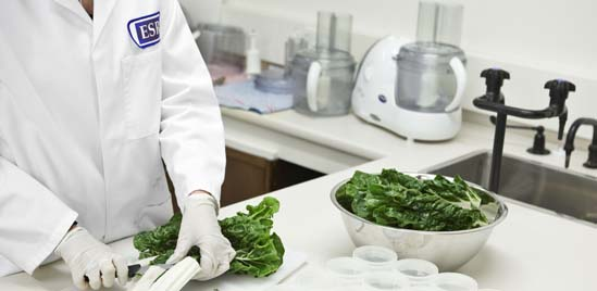 A scientist cutting a spinach in a laboratory.